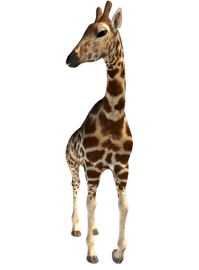 Giraffe transparent png. Stickpng