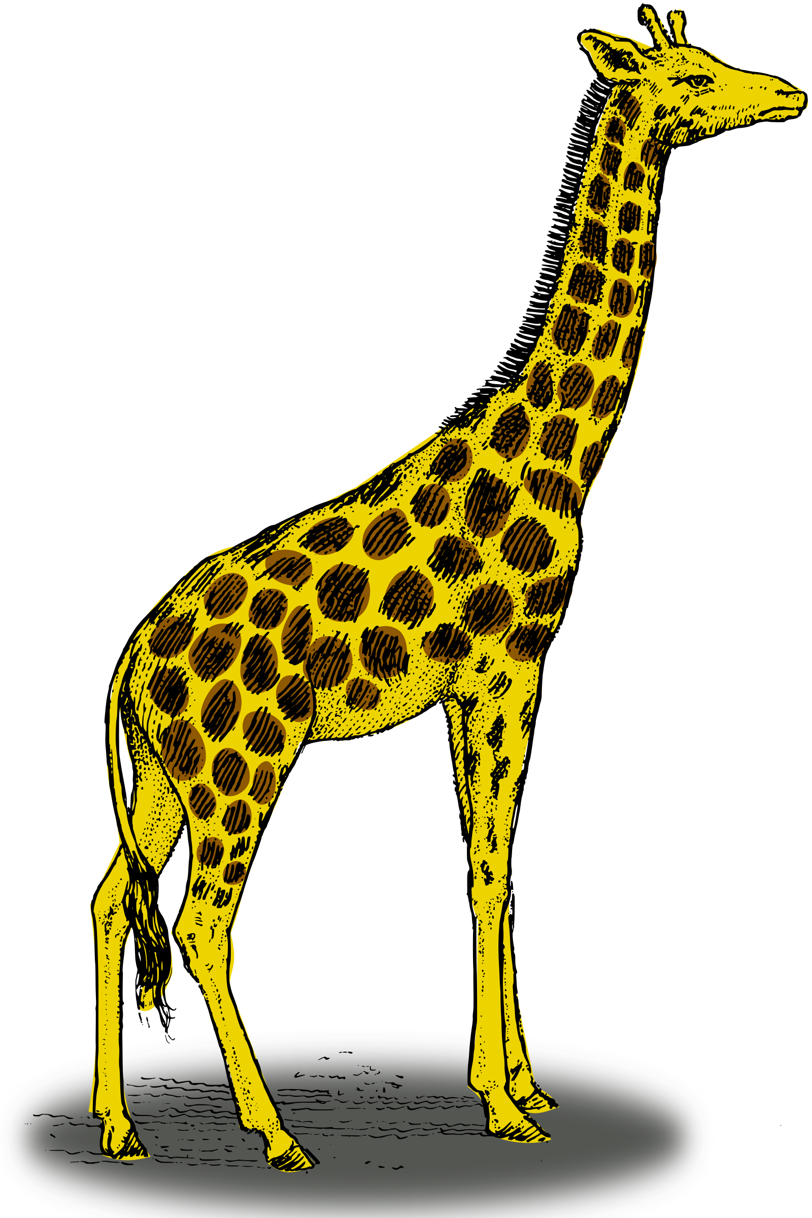 Girrafe drawing color. Collection of giraffe