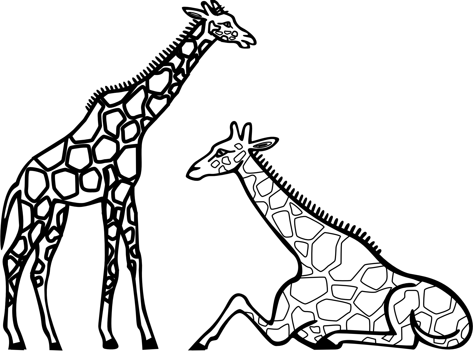 Girrafe drawing colouring. Zebra clipart black and