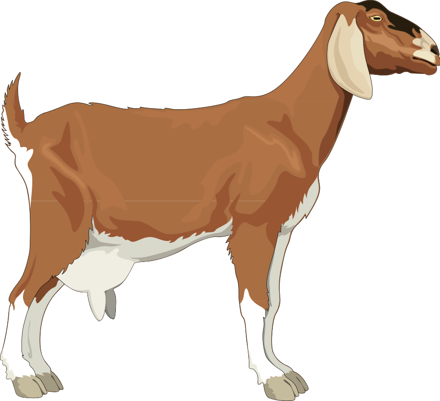 Goat tail. Free cliparts download clip