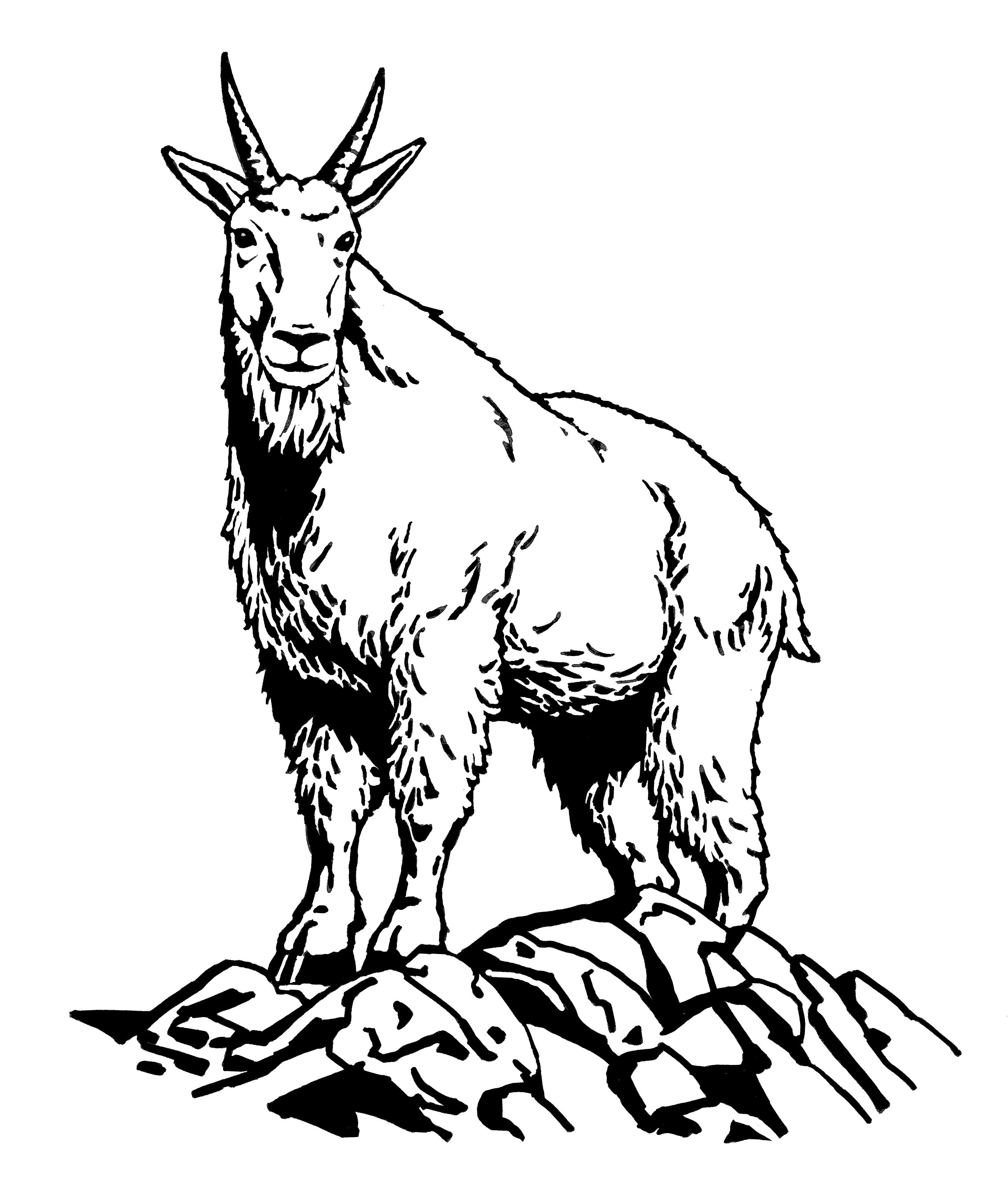 Goat clipart mountain goat. Drawing at getdrawings com