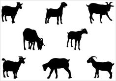 Goat clipart nigerian dwarf goat. Pygmy silhouette at getdrawings