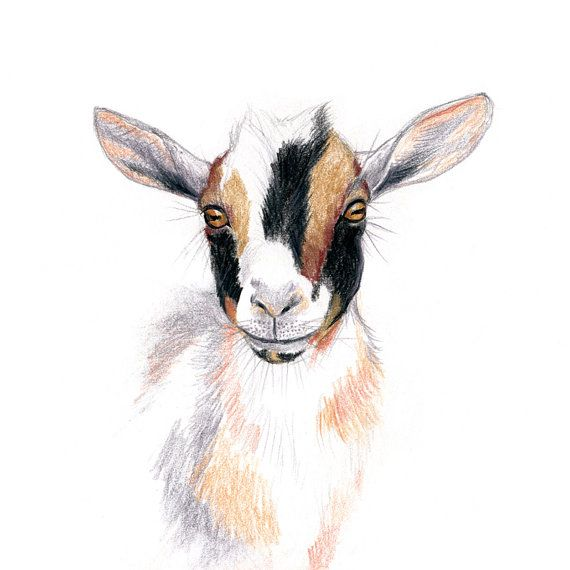 Goat clipart nigerian dwarf goat. Wall art print drawing