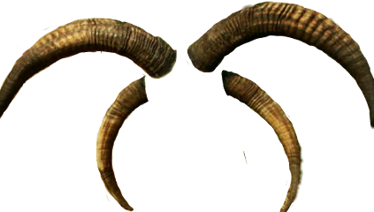 Largest collection of free. Goat horns png clip transparent library