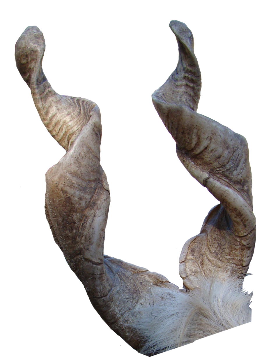Goat horns png. Horn precut by luda