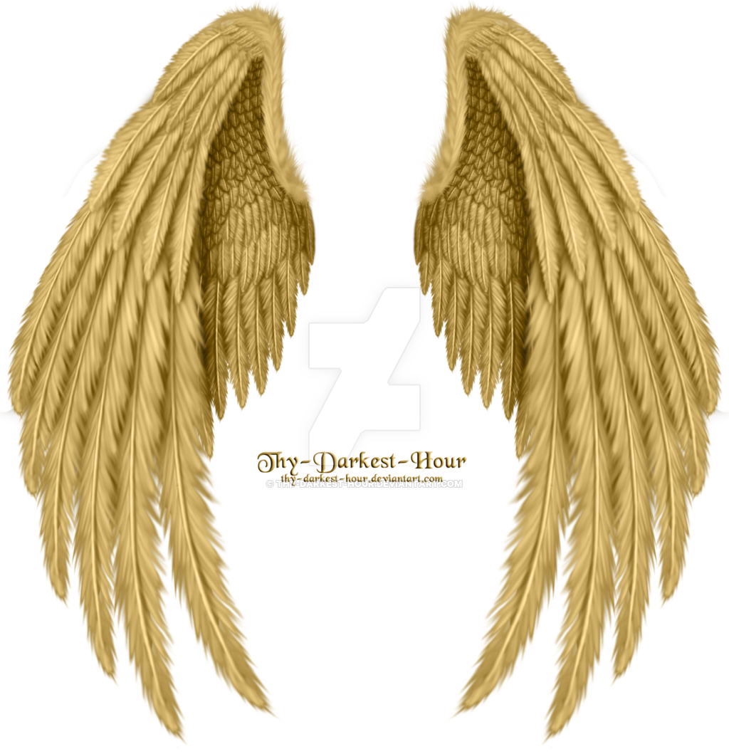 Gold angel wings png. Image