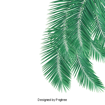 Palm leaf texture png. Images vectors and psd
