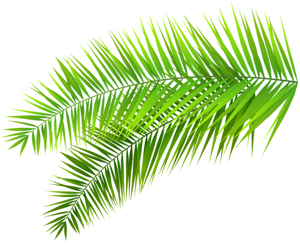 Gold palm leaves png. Palms leaf plants green