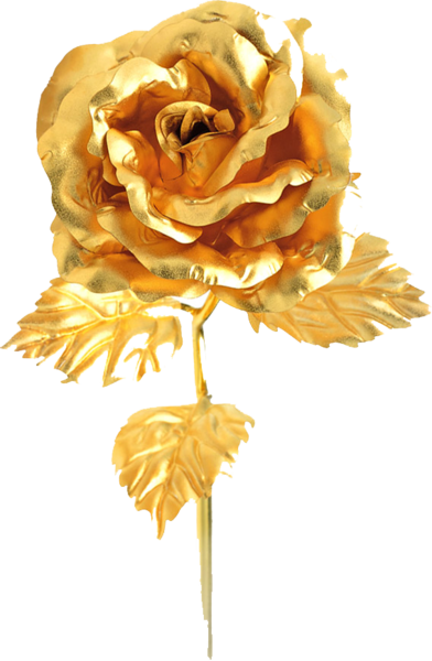 Gold rose png. Psd official psds