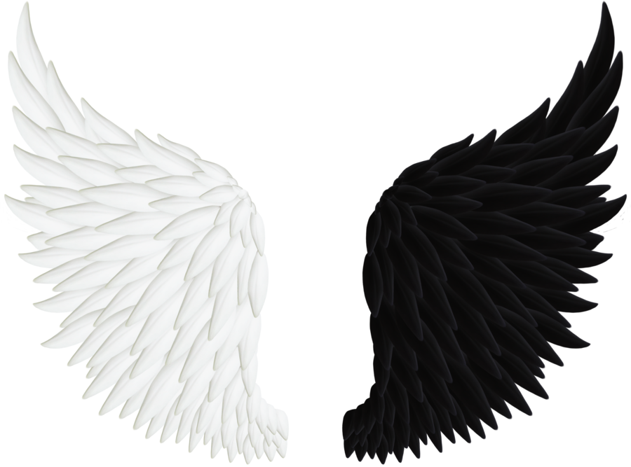 Falling angel feathers png. Angels wings by thy