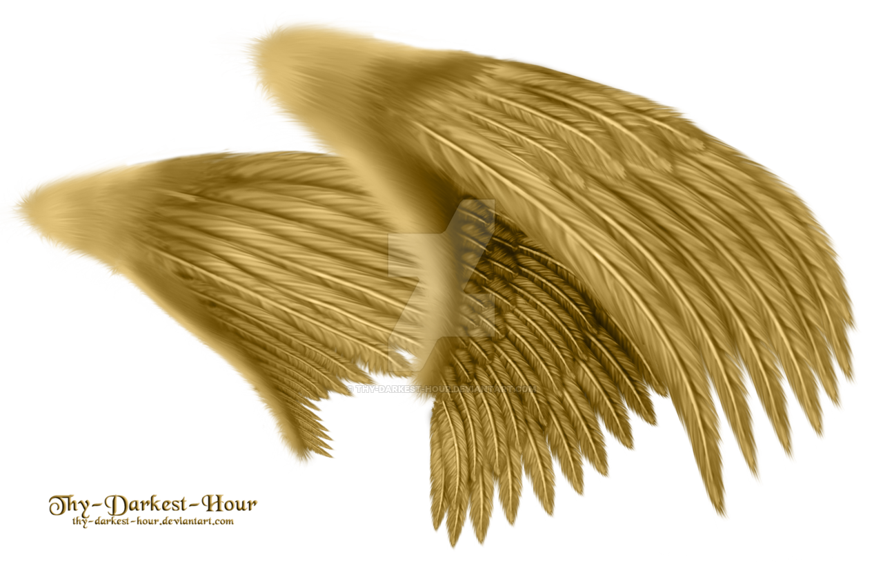 Golden 3 angels wings png. Dual gold large psd