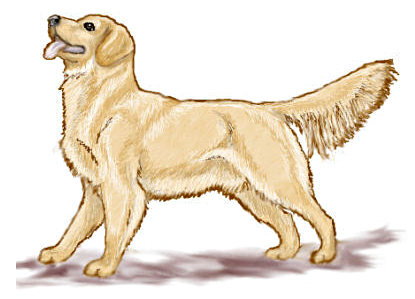 Golden retriever clipart.