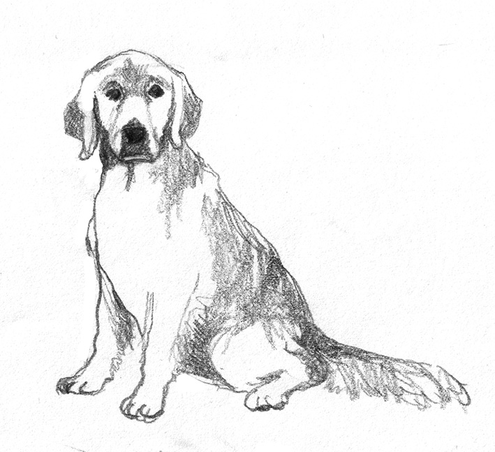 Golden Retriever Easy Drawing Transparent Png Clipart Free
