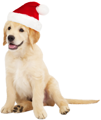 Golden retriever with glasses dogs png. Cute dog santa hat