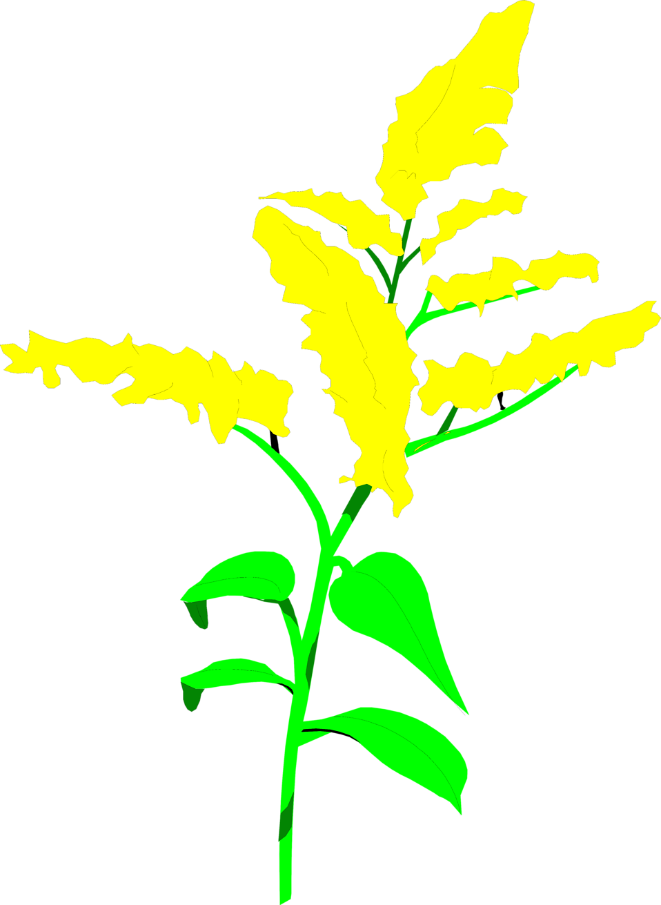 Goldenrod drawing solidago. Free cliparts download clip