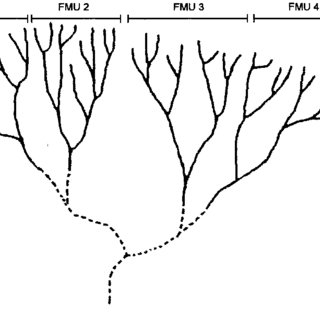 Goldenrod drawing scientific. Pdf nutrient translocation and
