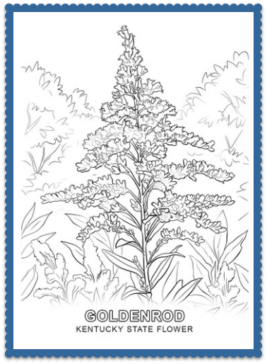 Goldenrod drawing state kentucky flower. By usa facts for