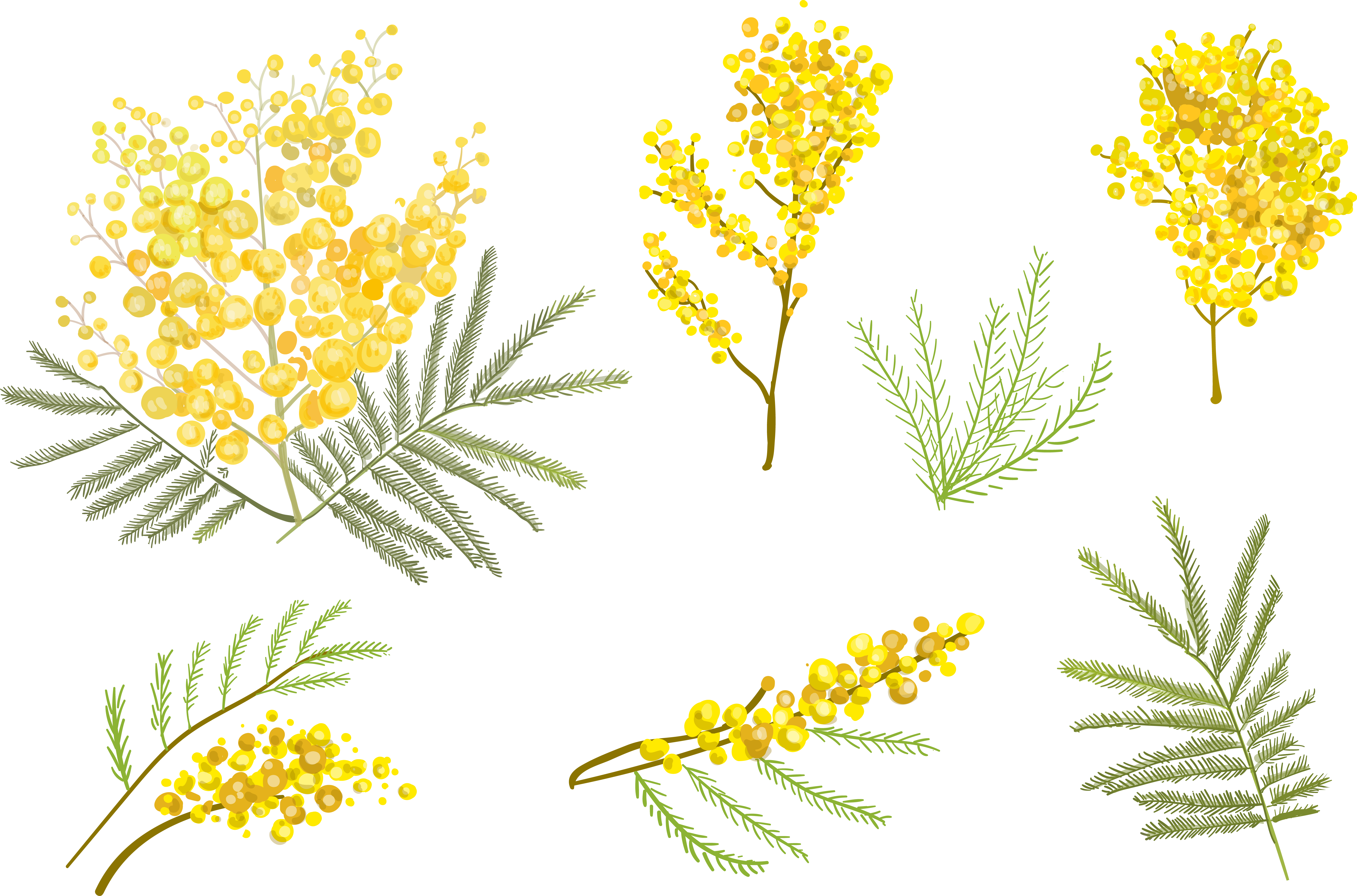 Goldenrod drawing watercolor. Flower euclidean vector clip