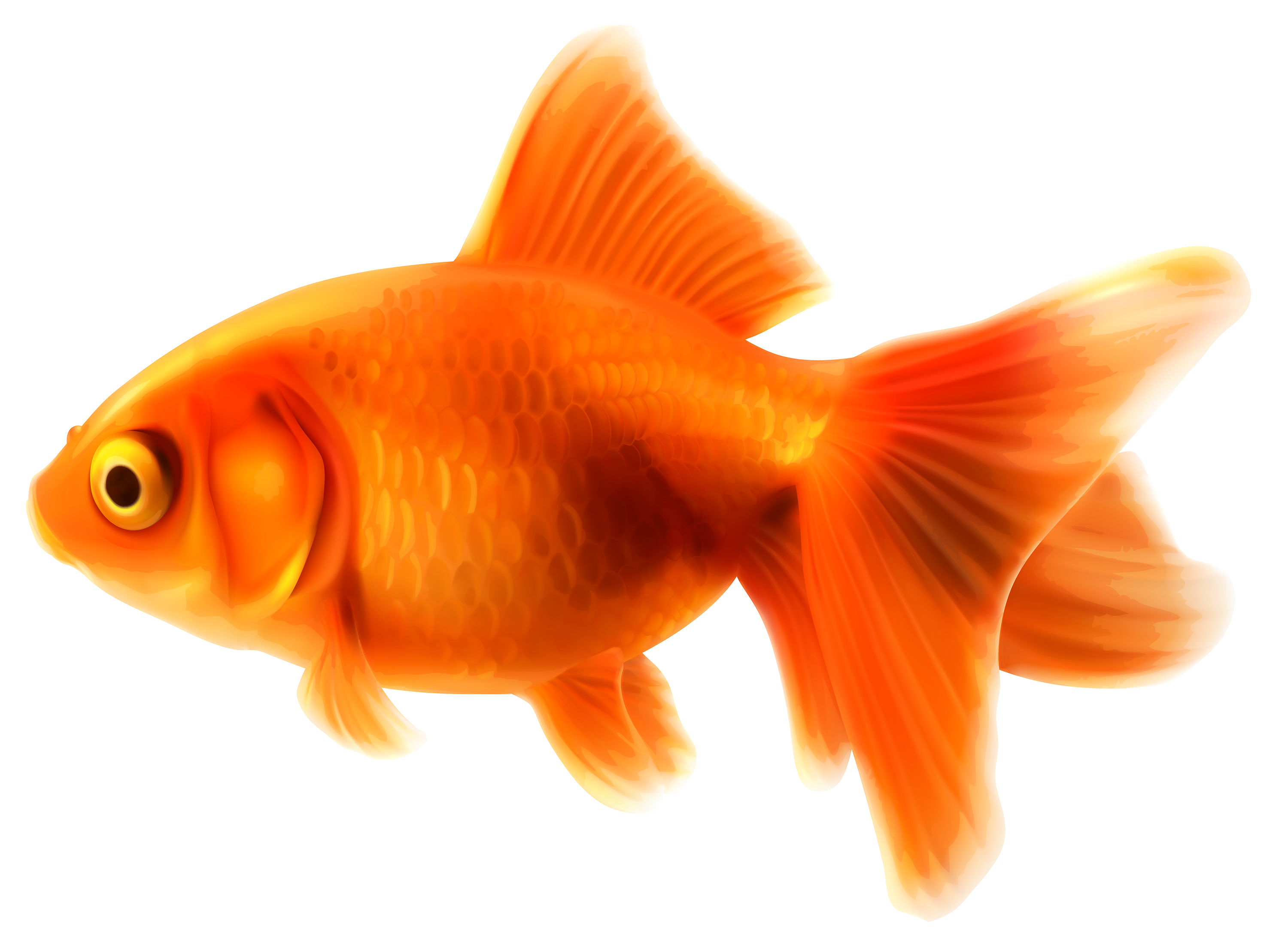 goldfish in bowl png