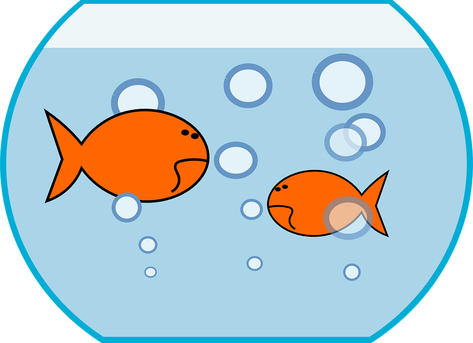 Goldfish clipart cartoon. Cliparts shop of library