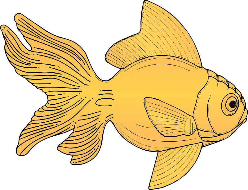 Drawing chinese goldfish. Free images download clip
