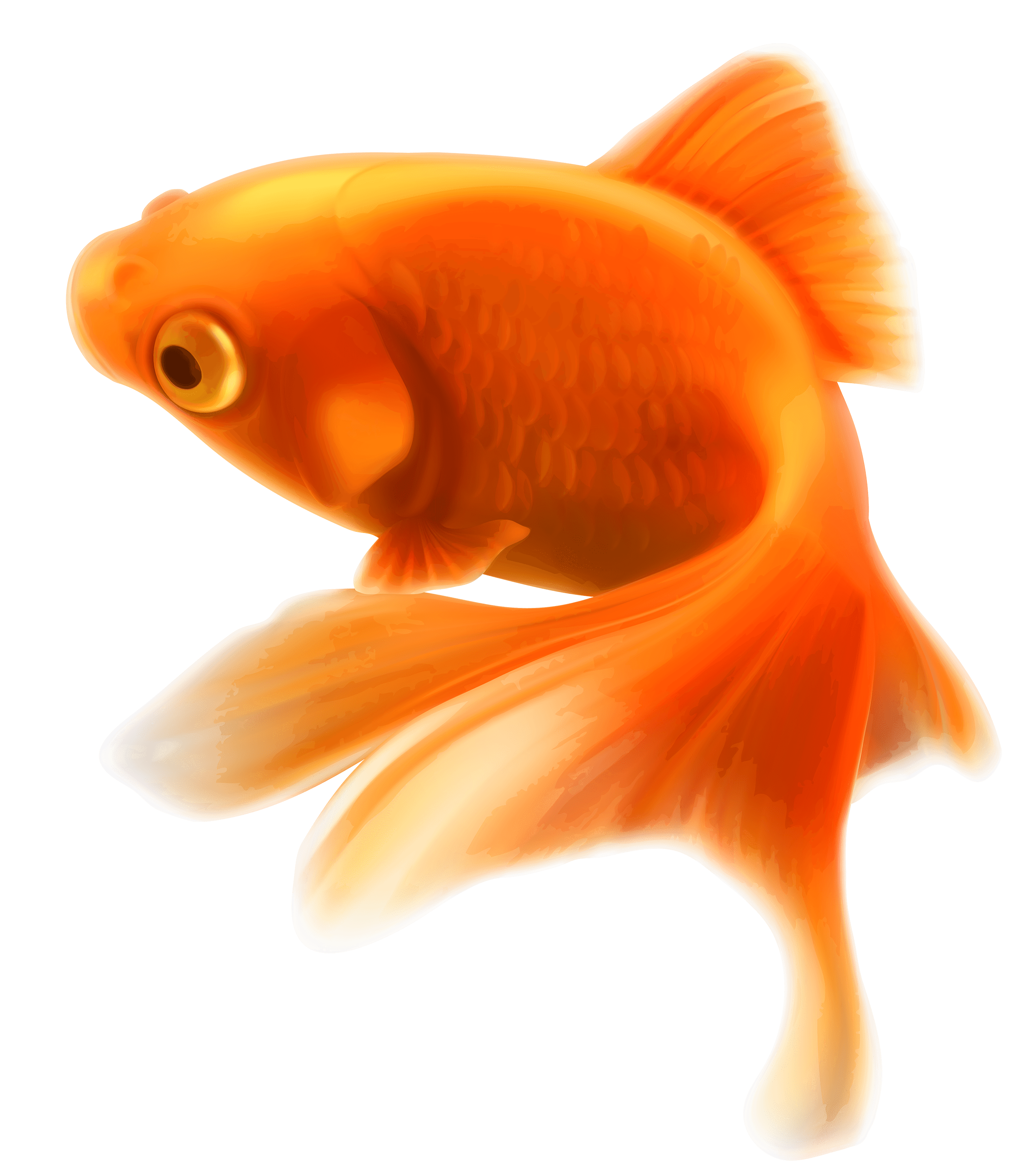 Fish png. Gold transparent stickpng