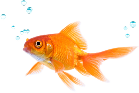 Fish png. Water transparent pictures free