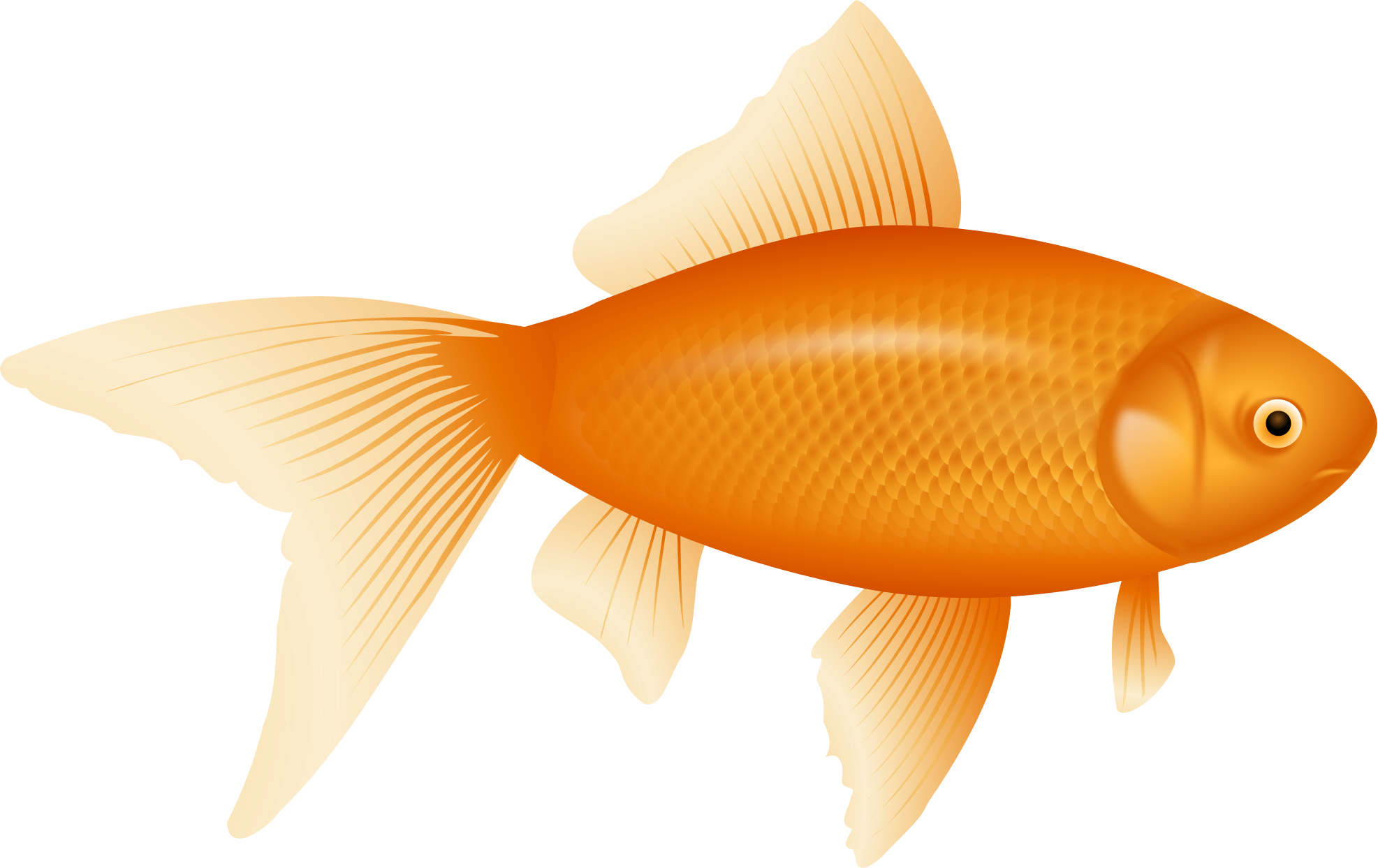 Goldfish png. Auksin a uvel icons