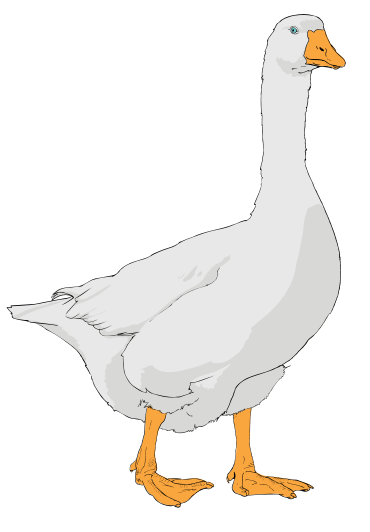 Goose transparent colorful. File clipart svg wikipedia