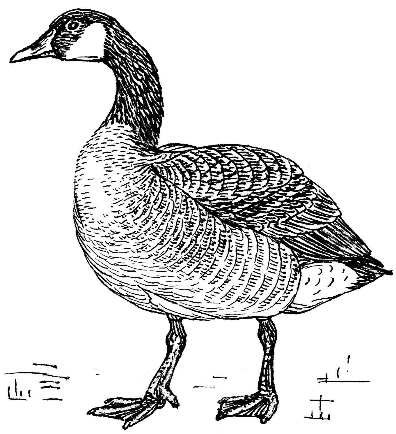 Goose clipart drawing. File psf png wikimedia