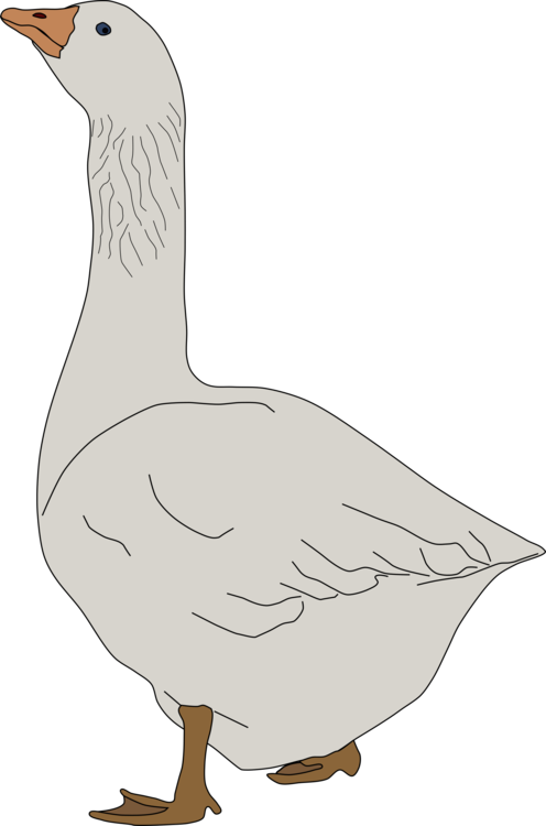 Goose transparent clipart. Domestic ducks geese and