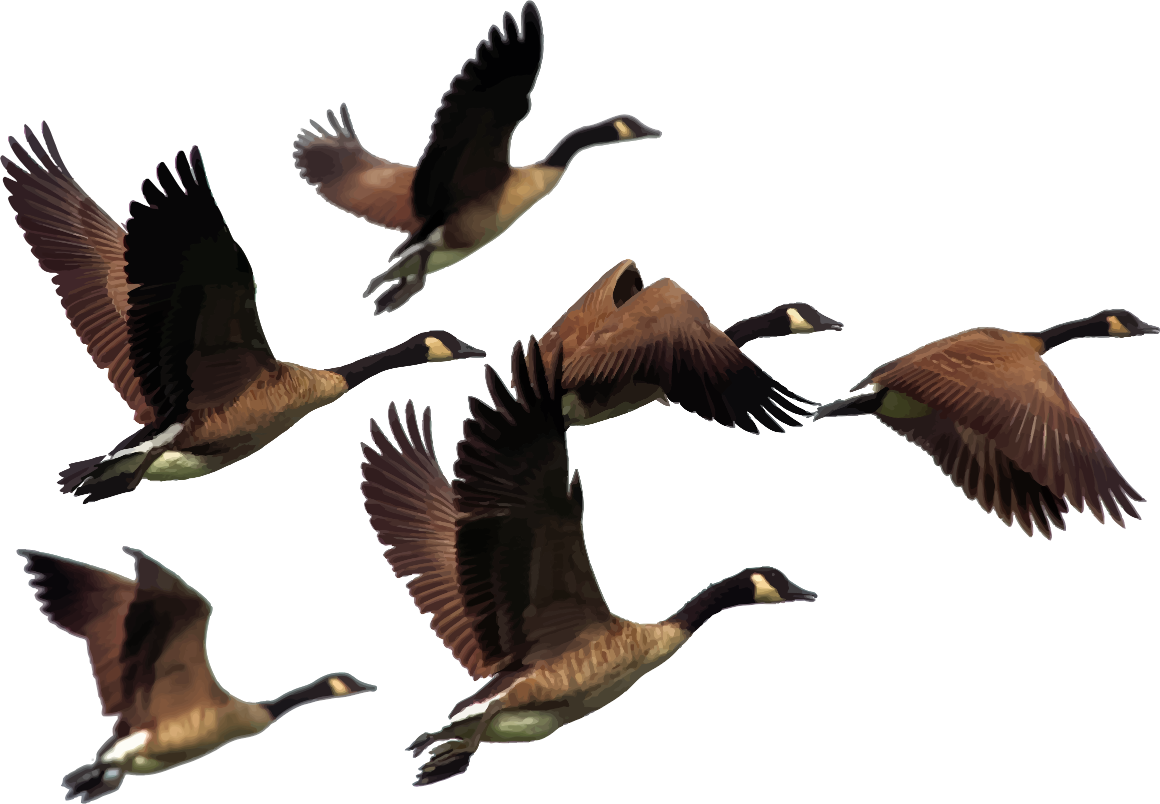 Goose transparent colorful. Gaggle of geese icons
