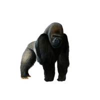 Gorilla clipart sad. Download free png photo