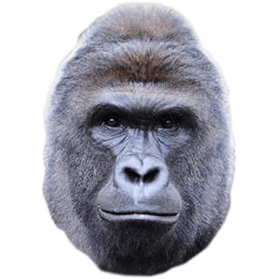Gorilla face png. Harambe gorillas free icons