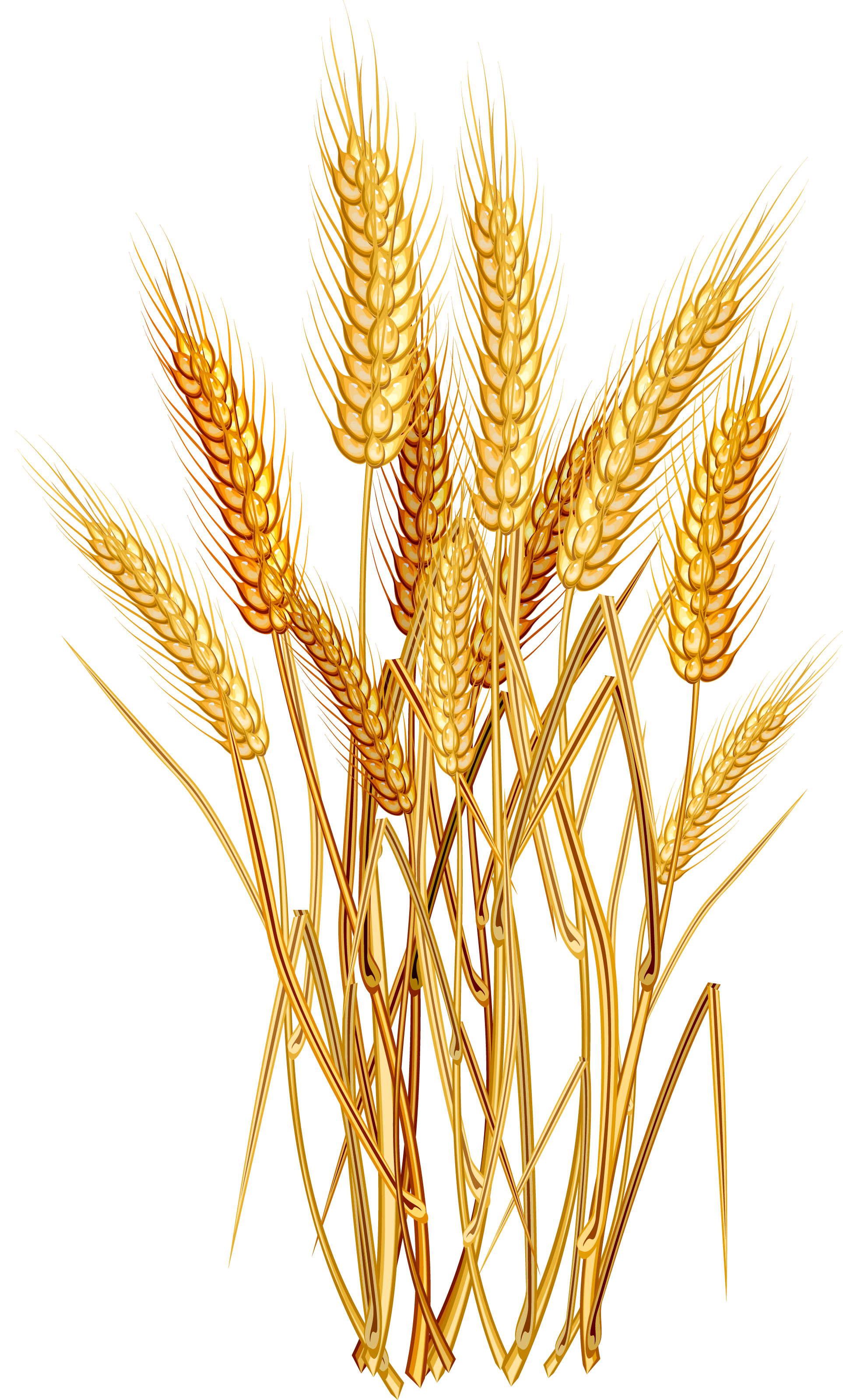 vector wheat ear