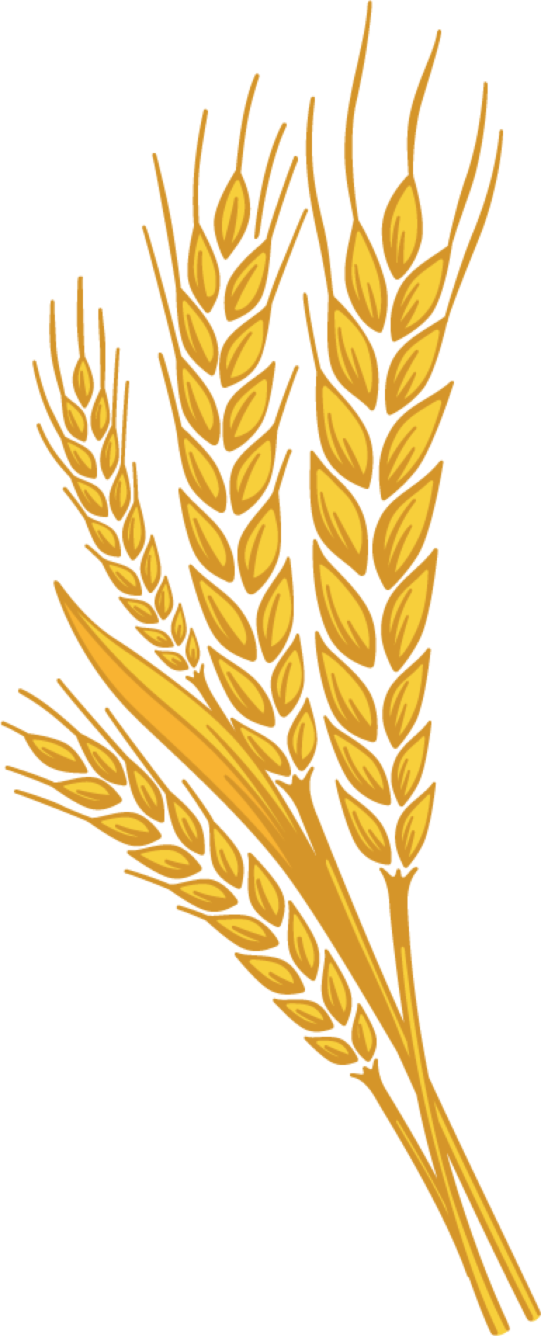 Grain wheat png.