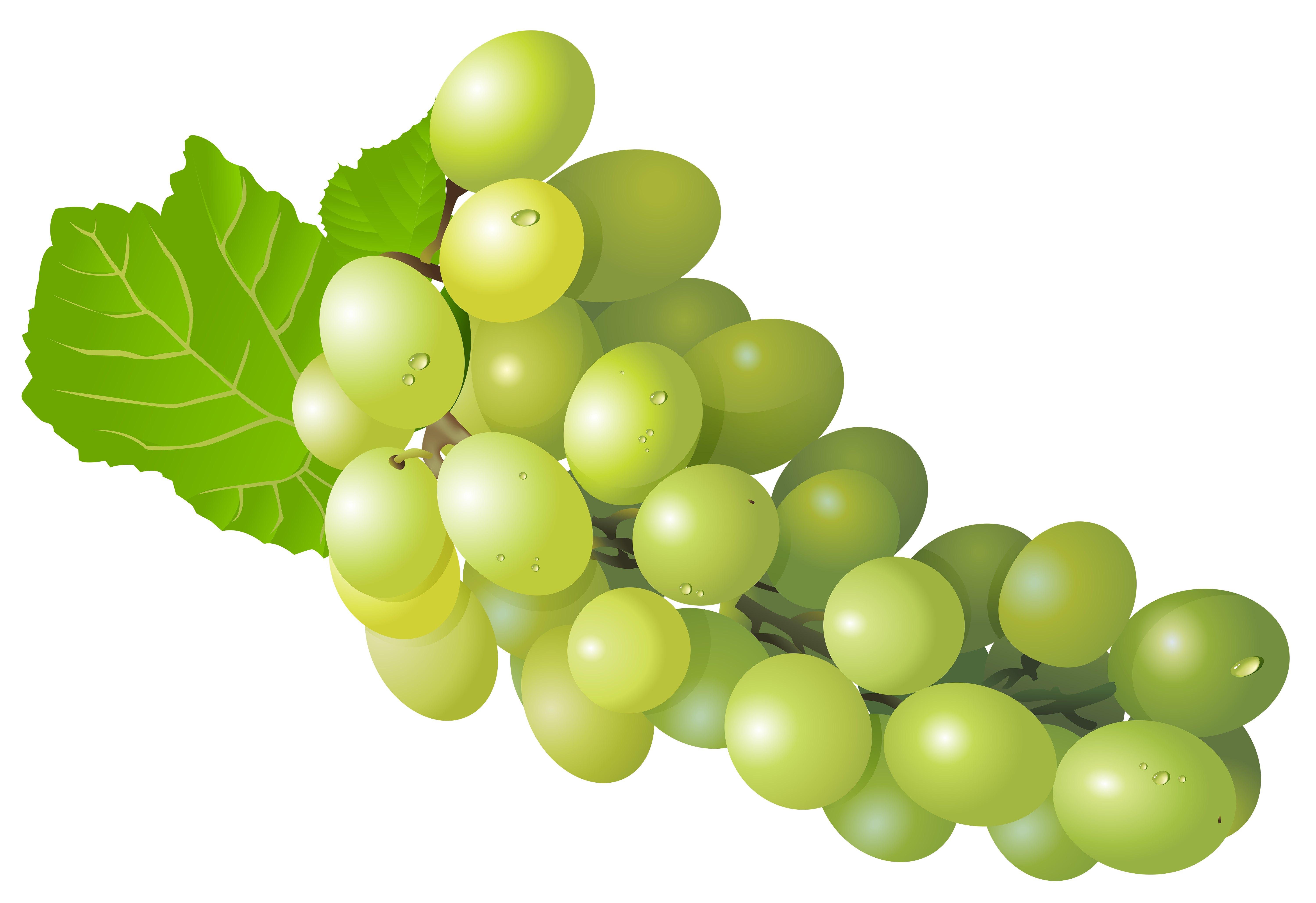 Grape png free clip. Transparent grapes high quality clipart free stock