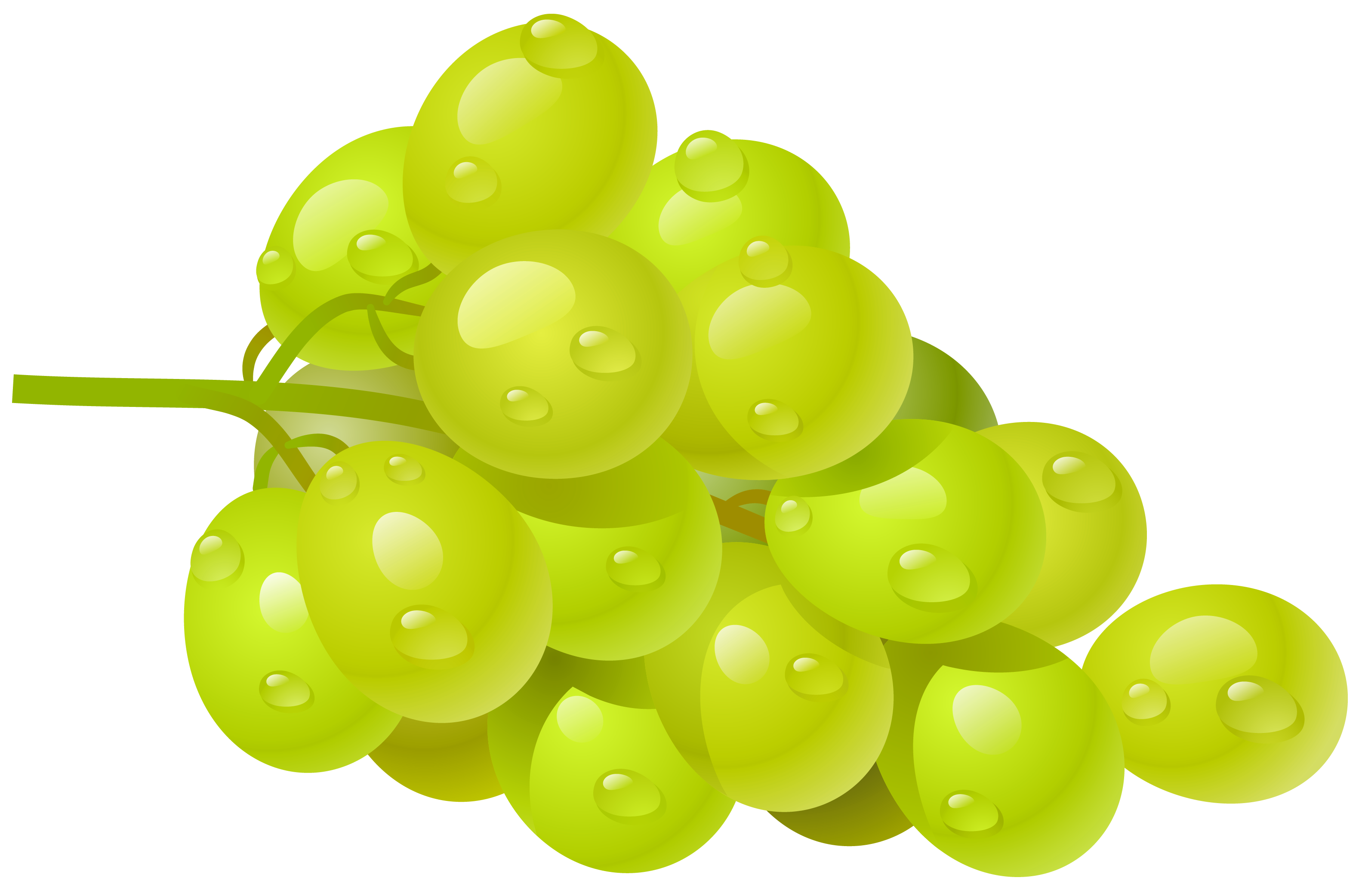 Grapevine vector circular. White grape png clipart