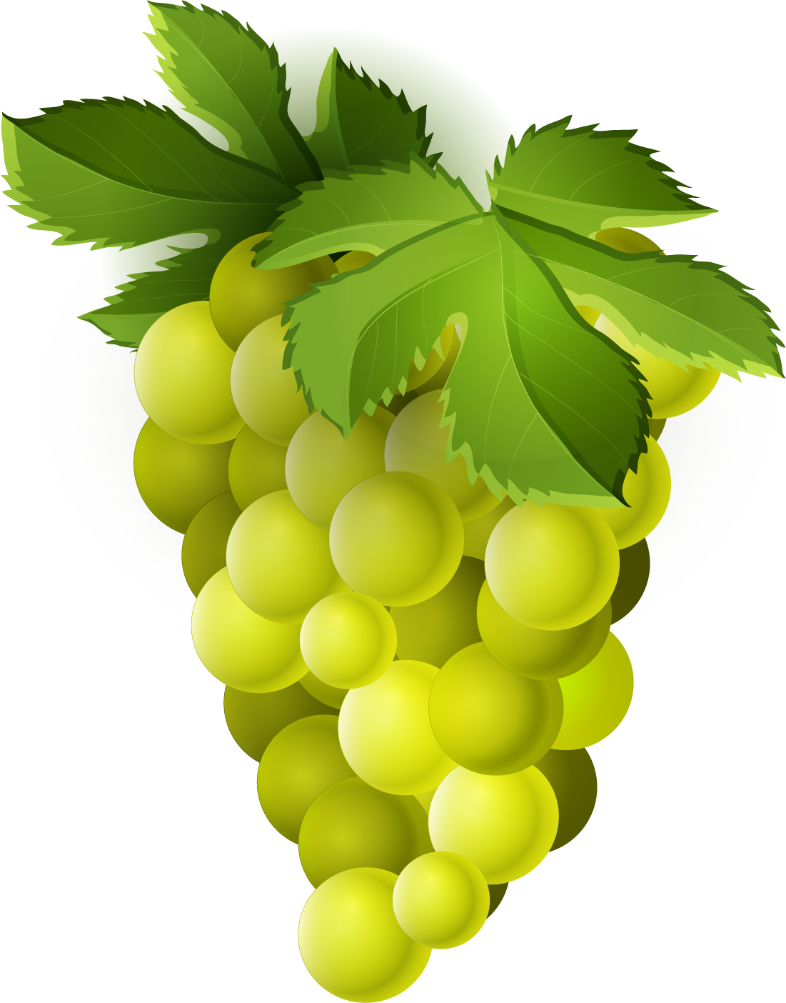 Sweet grape. Png transparent free images