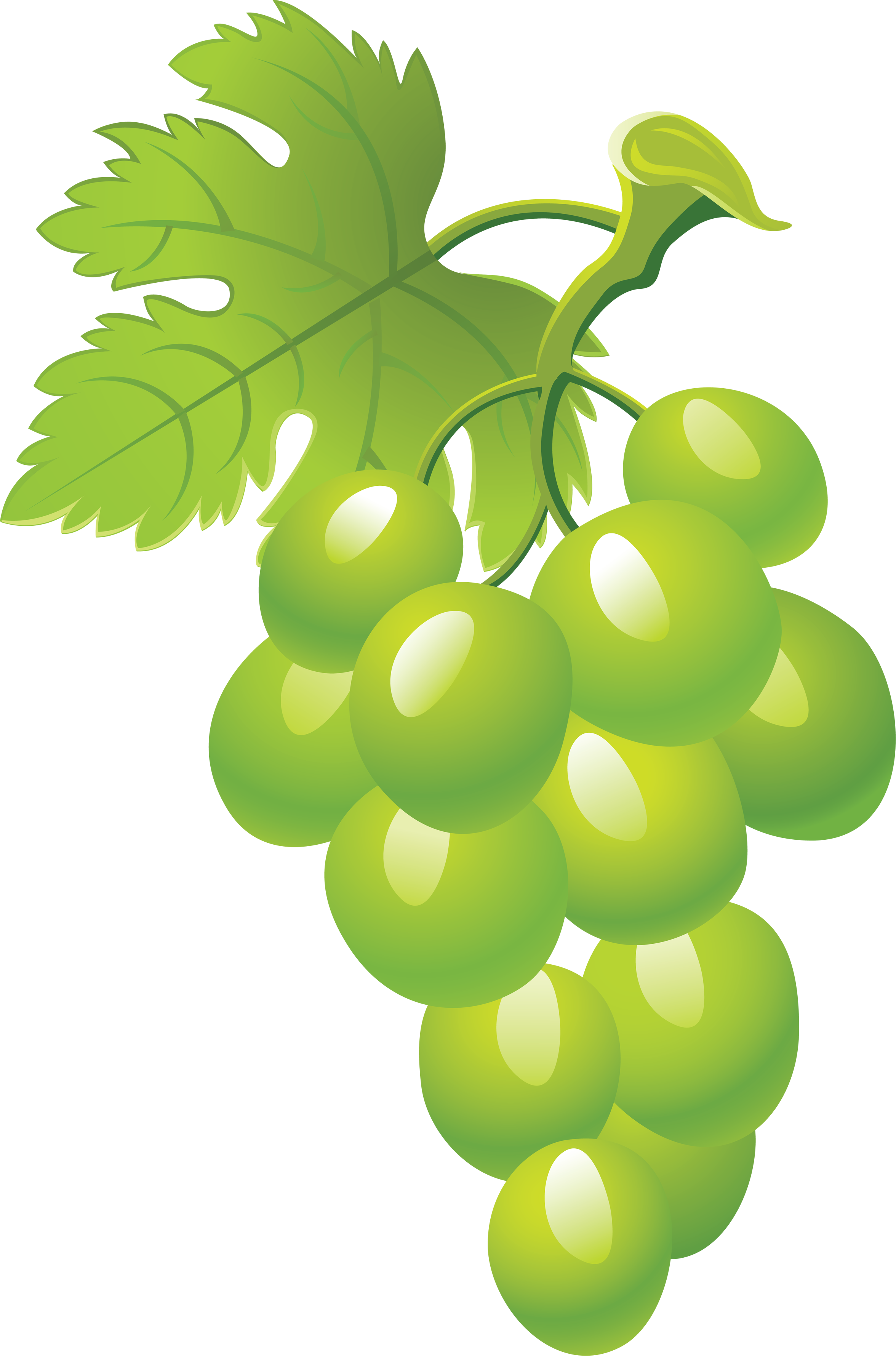 Transparent grapes animated