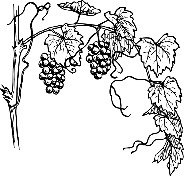 Grape clipart vine clip art. Black and white grapevine