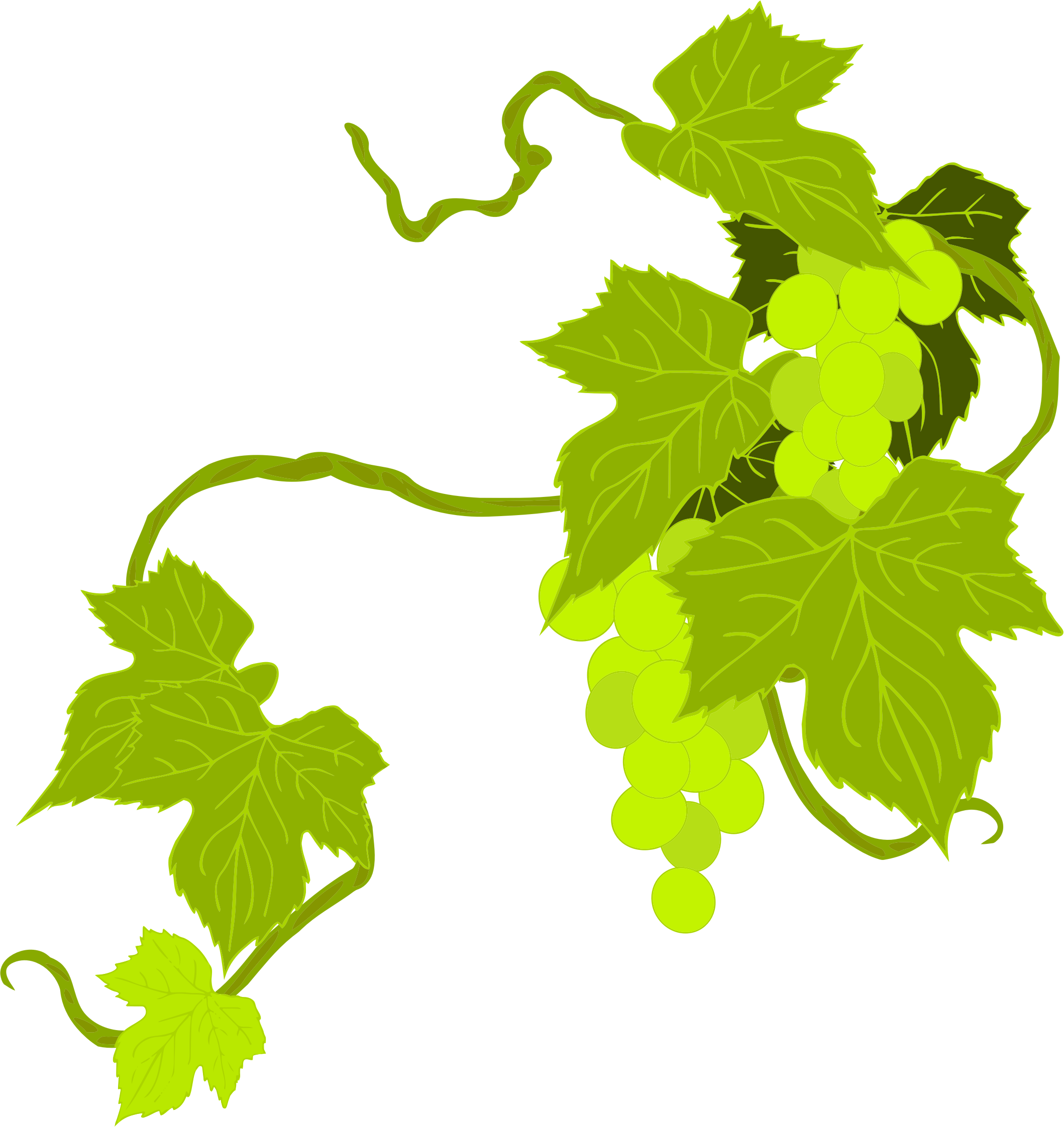 Transparent grapes illustration. Clipart big image png