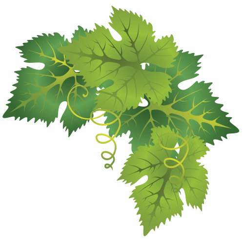 Grape leaves png. Three sisters organic right