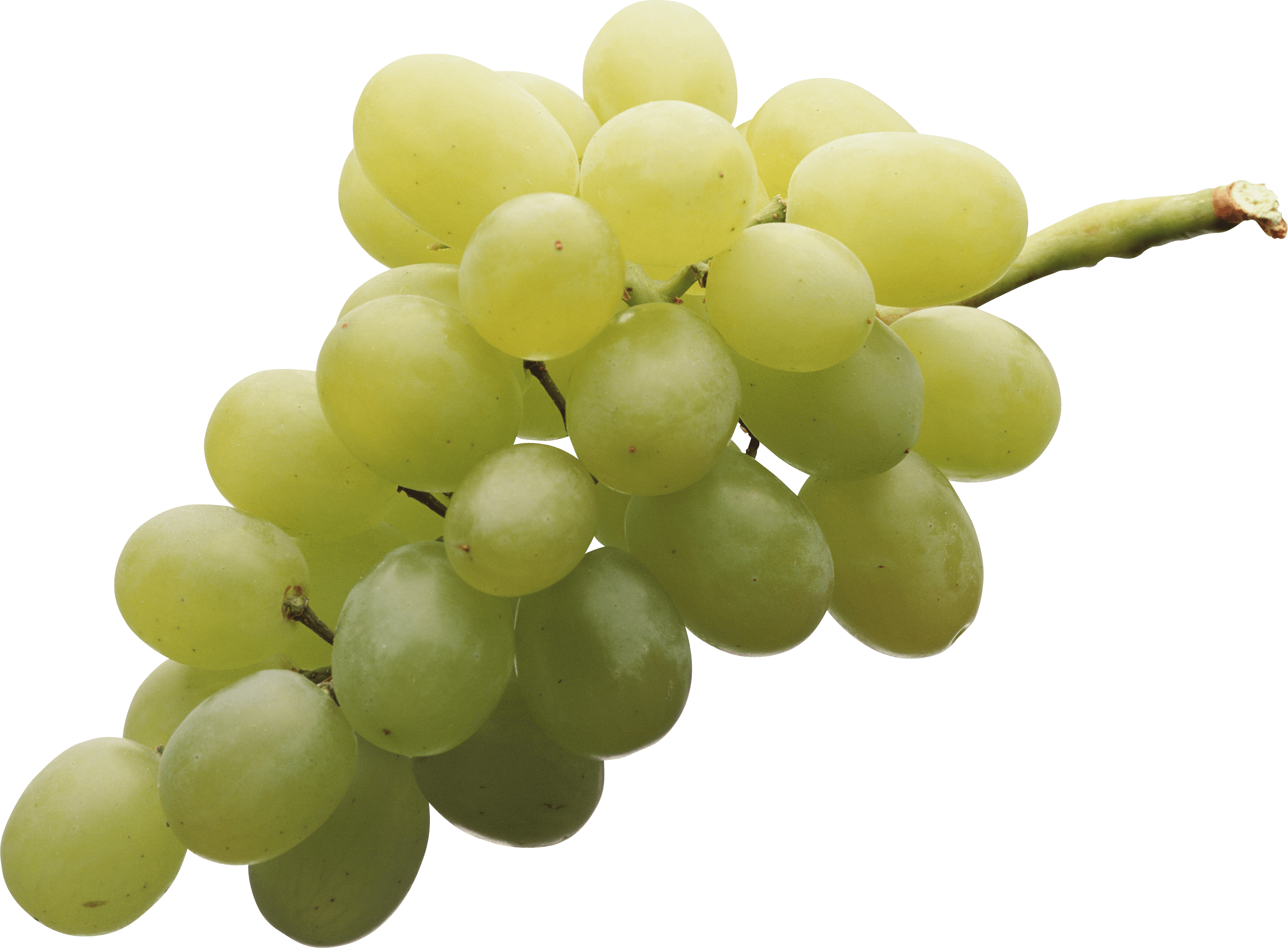 Isolated white grape png. Transparent grapes high quality vector freeuse stock