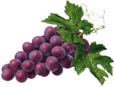 Grape transparent high quality. Red png picture gallery