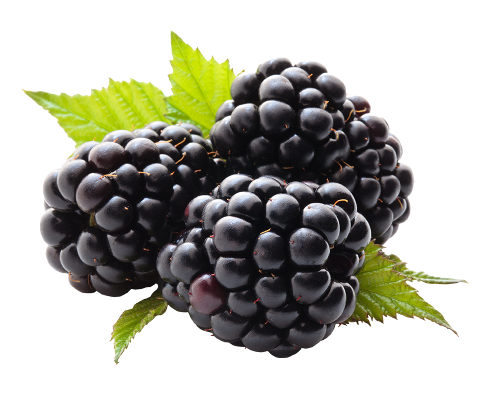 Grape transparent high re. Blackberry fruit png free