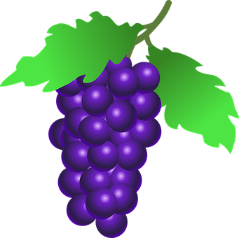 Grapevine vector circular. Collection of free grapes