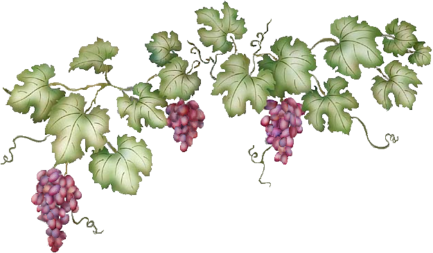 Grape vine border png. Collection of vines