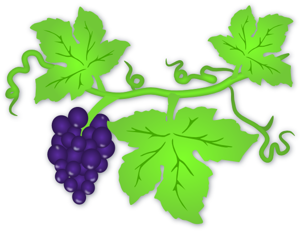 Grape vine clipart png. Collection of free