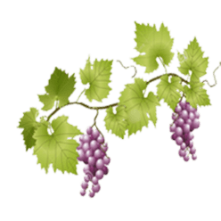 Grapes on vine transparent. Grape vines png vector black and white library